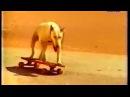 Sandmann's Dummies - Der Fuchs Geht Durch Den Wald