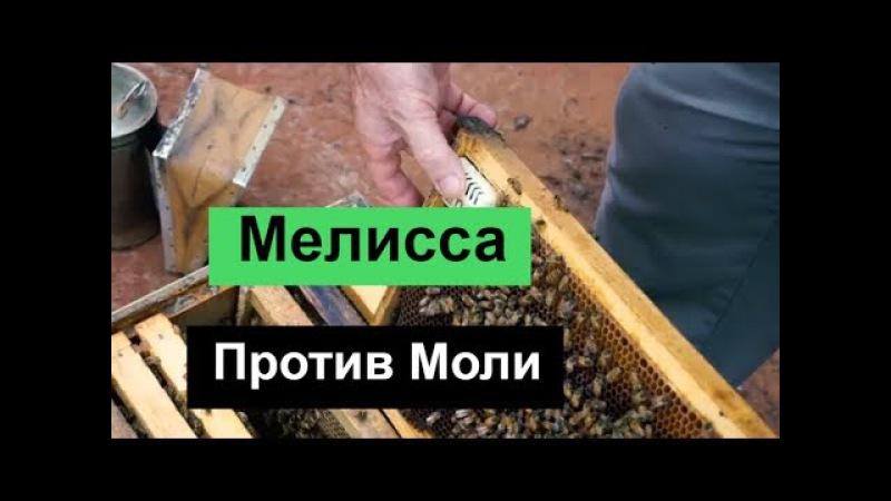 №106 Мелисса Против Моли.Пчеловодство
