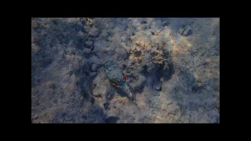 Рыба-Камень Красного моря.Шарм эль шейх.13.11.17 г