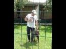 Доберман пинчер Карат в зоогостинице