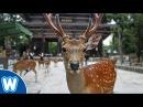 Deer Park - Nara Japan 奈良鹿公園