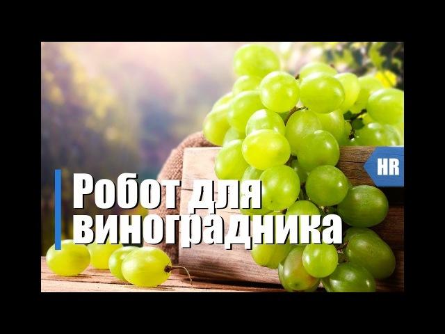 Технологии для виноградников. Робот на винограднике Hitech Review.