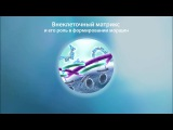 Faberlic Matrigenic реактивация 14 генов красоты