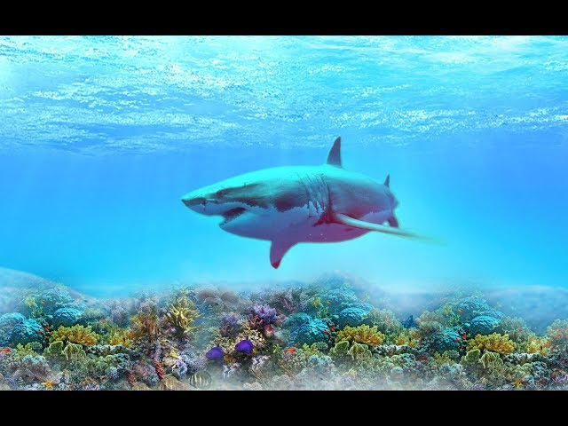 The MOST MAJESTIC FISH IN the WORLD- music, Sergey Grischuk ,,MELODY OF RAIN,,