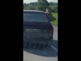 Знай наших! ???? Порося на заднем сиденье авто обозревает окрестности...