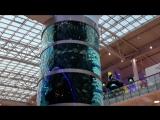 Гигантский аквариум из книги рекордов Гиннесса в Москве