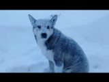 Новости на «Россия 24»  •  Дома замело, транспорт ходит с перебоями: на Сахалине свирепствует снежный циклон