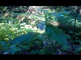 Краснокнижные растения Беловежской пущи