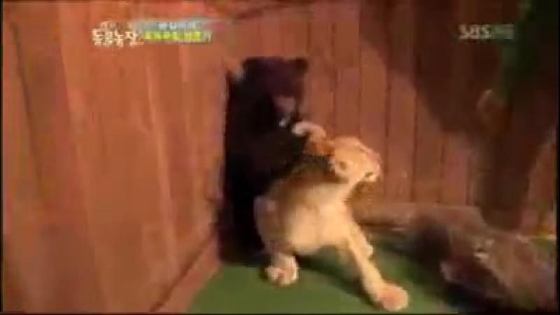 я вся обосалась со смеха так над животными стибаться!