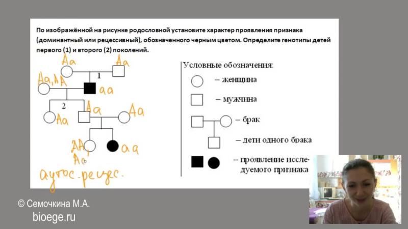Решение задач на родословные