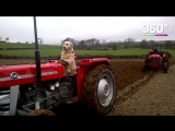 Собака-тракторист