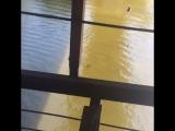 Прыжок с моста Самара р. Сок