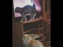 Адольф ищет кота..за телевизором,собаки не понимают..., почему Адольф так орёт..😂🙉