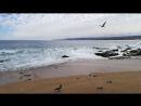 Paloma disfruta el día a la costa
