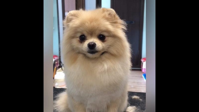 Собаки понимают нас, посмотрите как она улыбнулась, после того как я назвала её красавицей😊😉