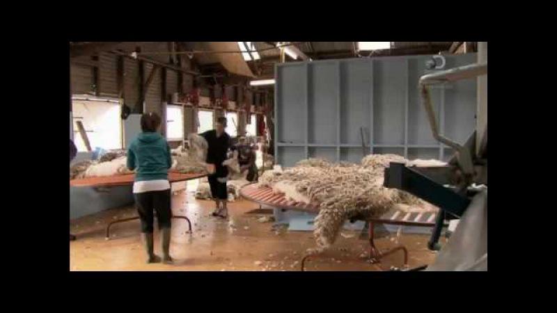 Стрижка овец ( Из чего это сделано )
