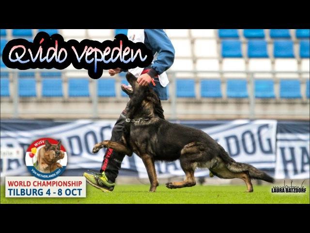 WUSV 2017 Vaclav Ouska Qvido Vepeden B Obedience 96pts