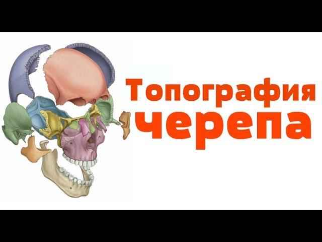 Видео-урок по анатомии. Топография черепа dbltj-ehjr gj fyfnjvbb. njgjuhfabz xthtgf