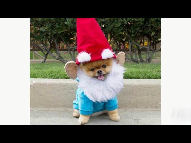 Символ нового 2018 года собака становится главным героем Сети. Хиты интернета