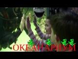 Идем смотреть акул в  самый большой океанариум в Краснодарском крае