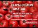 Выращиваем томаты Часть первая. Рассада. томаты