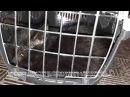 Ночью волонтеры приюта Дари добро вновь едут в город спасать уличных котят Ловя ...