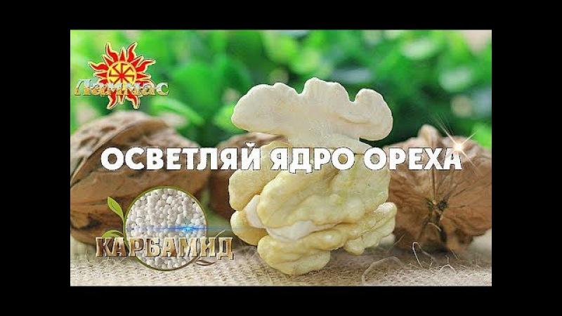 Как осветлить ядро грецкого ореха и поднять цену? Карбамид. Walnuts Broker