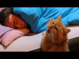 Funny Cats Waking up Owner Cat Alarm Clocks Top Cats Video Compilation