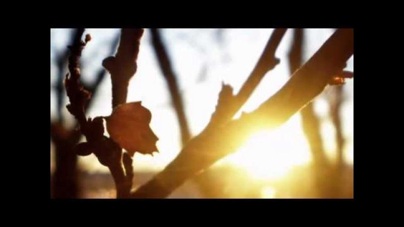 Потап и Настя Каменских Чумачечая весна римейк клип