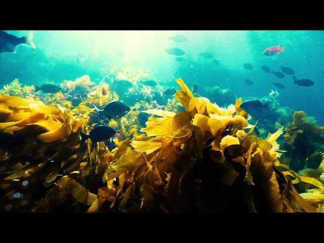 Underwater world 6