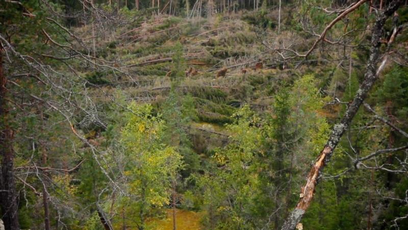 Чудесный лес Tale of a Forest Wunder des Waldes Metsän tarina (2012) BDRip 720p