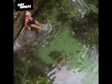 Плавание с милыми черепашками