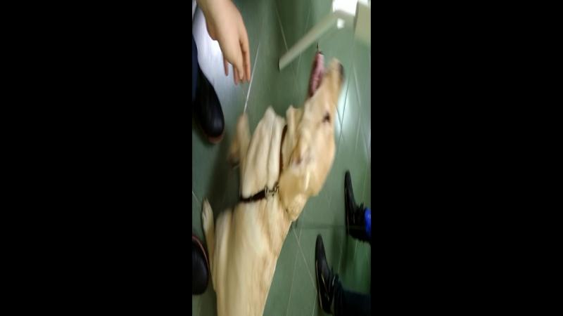 Неугомонная малышка Трейси в гостях в городском ветеринарном центре Лахта! :)