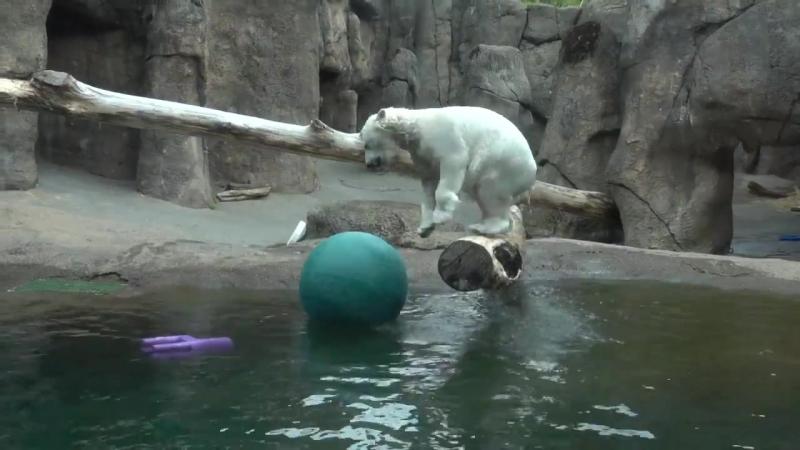 Медведица не может поймать мяч