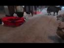 Кошка против Рыси. Смертельная схватка.