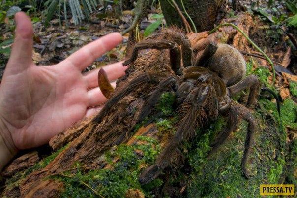 Топ 10: Животные, аномально-больших размеров