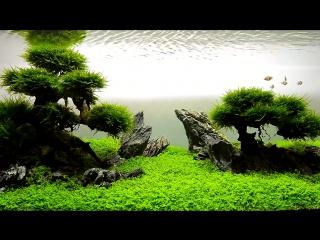 Bonsai Aquarium. JBL AQUASCAPE By Vladimir Chirilov