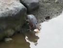 Ловись, ловись, рыбка большая на маленькую .