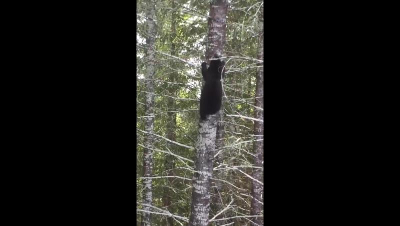 Медведь и дерево