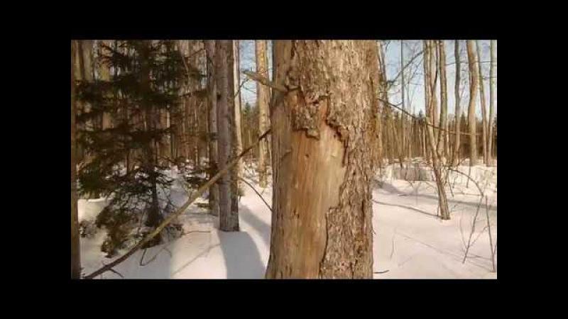 Зимний лес inf