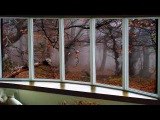 Дождь и ветер с переливами (Юрий Лорес)