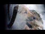 Снится женщина. Стихи - Александр Смогул. Музыка,исполнение,видеоряд - Виктор Попов.