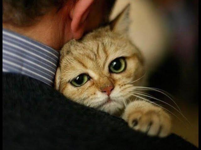 Кот с душой человека...