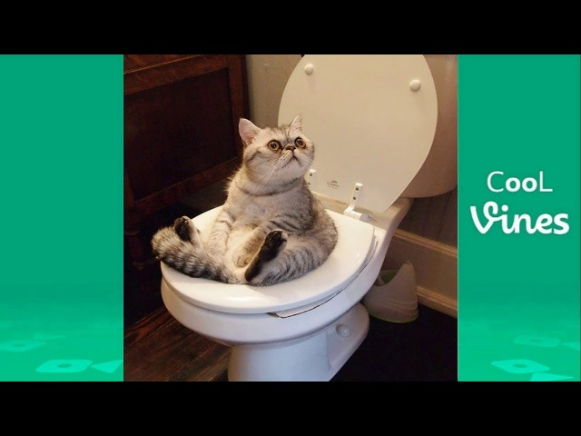 Try Not To Laugh Challenge - Funny Cat Dog Vines compilation 2017