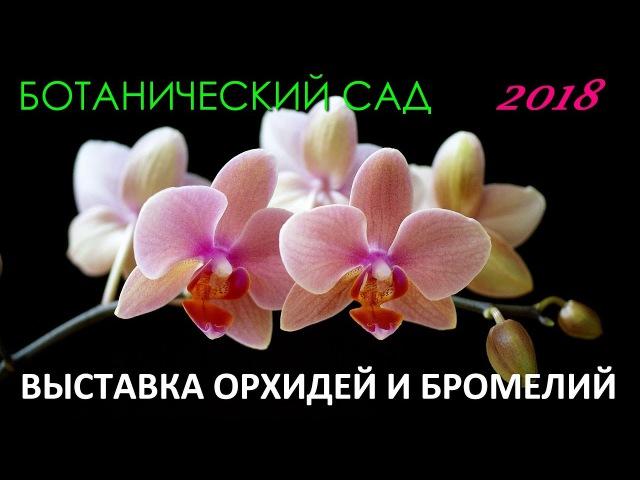 Санкт-Петербург Выставка орхидей и бромелий в Ботаническом саду 2018