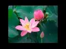 Разум растений / Lesprit des plantes Франция - Южная Корея, 2009