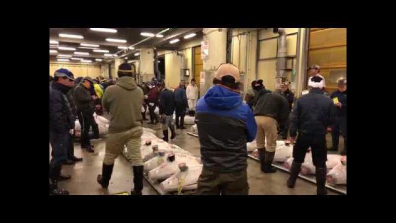 築地市場のマグロのセリ Tuna Auction Tsukiji Fish Market