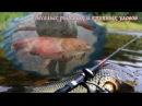 С днем рождения, рыбак! Музыкальная открытка рыбаку.