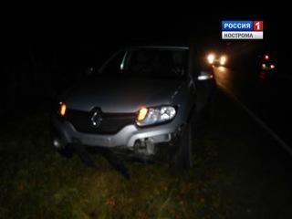 В Костромской области лось спровоцировал крупную аварию с тремя машинами
