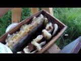 Настоящий дикий мёд, и это не реклама